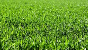 SoMK_gräs