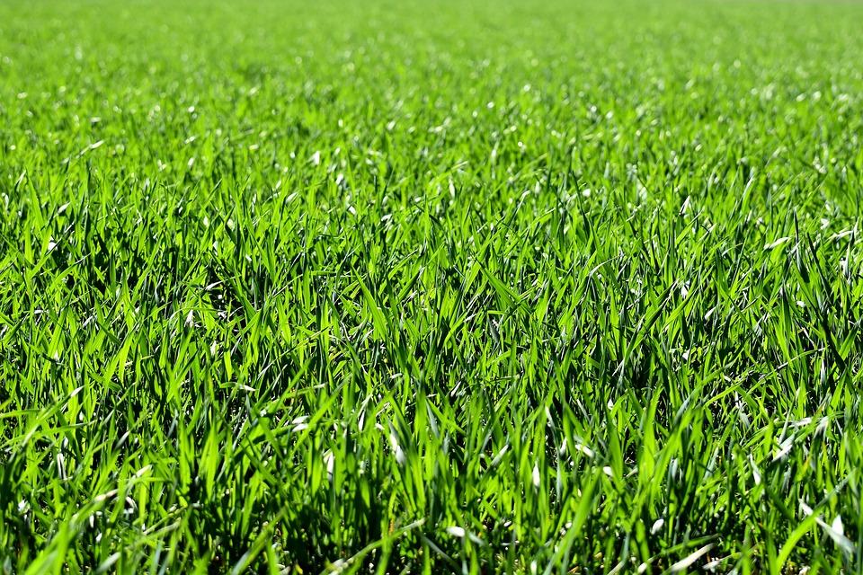 Underlag för sommarens gräsklippning